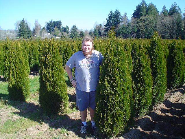 Emerald Green Arborvitae - Thuja Occidentalis Smaragd
